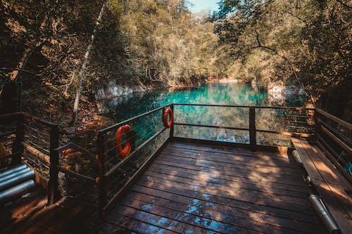 Doğa Ana, doğa duvar kağıdı, doğa fotoğrafçılığı, doğa patikası içeren Ücretsiz stok fotoğraf