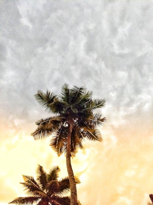 Gratis arkivbilde med himmelen og kokosnøttetreet ...