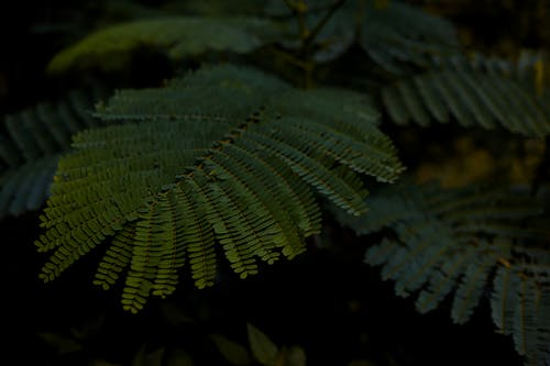 Close-Up Photo of Green Fern Leaves
