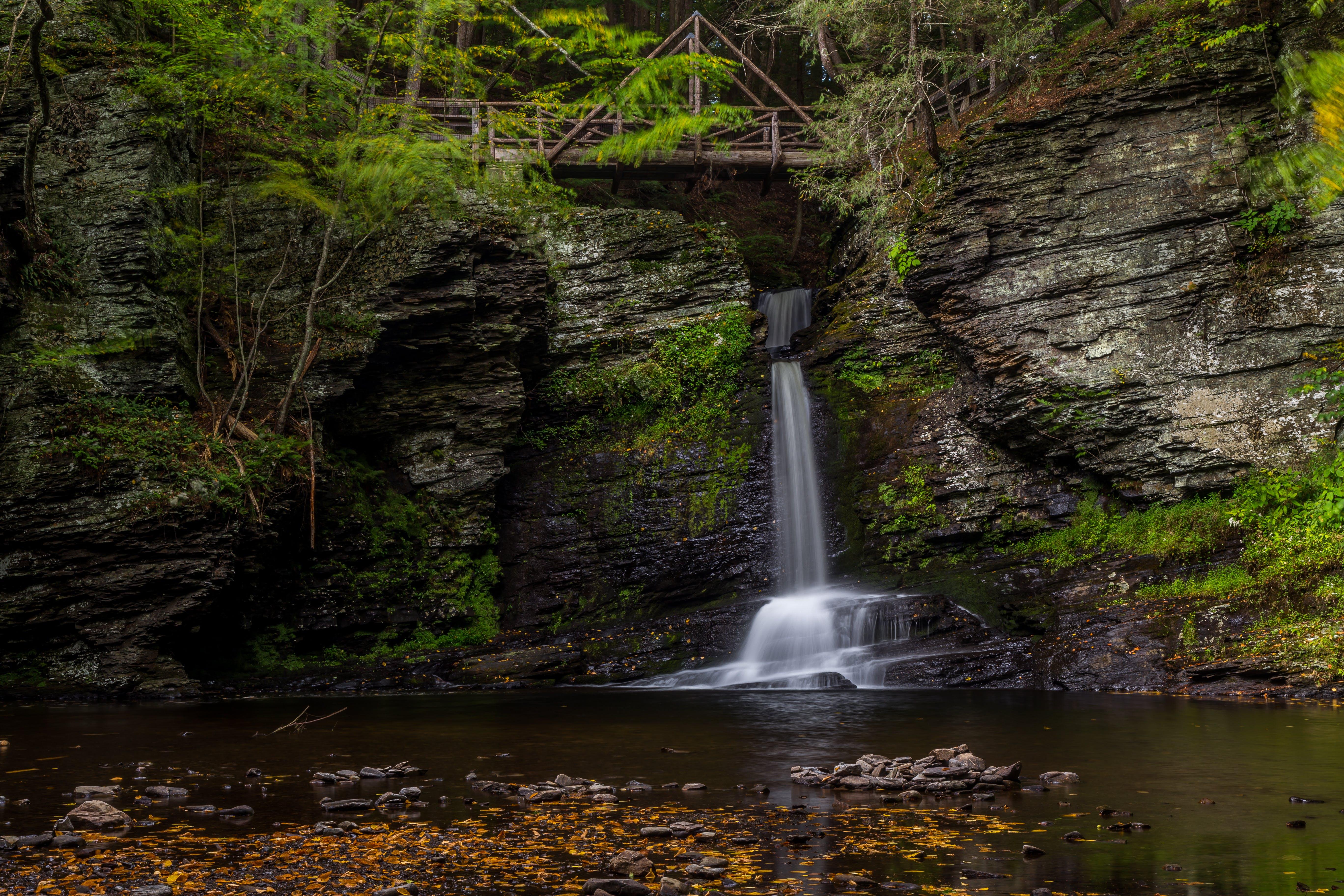 Fotos de stock gratuitas de agua, arboles, bosque, cascadas