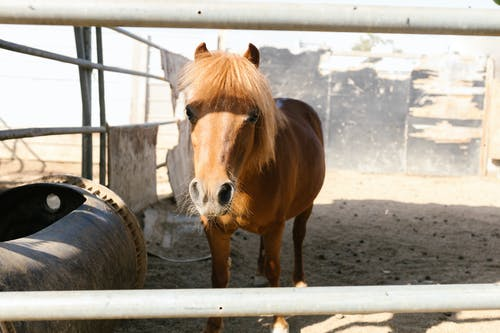 Shallow Focus Photo of a Brown Horse Inside the Ranch
