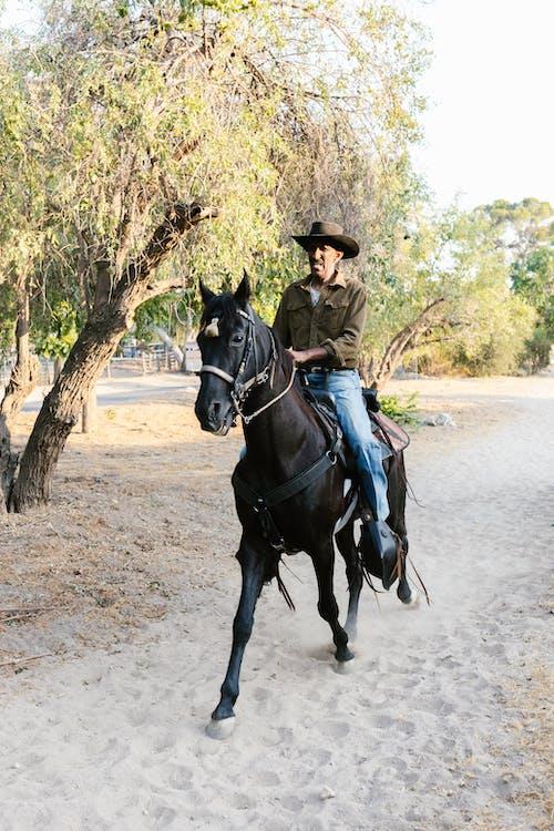 A Cowboy Riding His Black Horse Outdoors