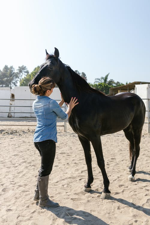 A Woman Taking Care of Her Black Horse