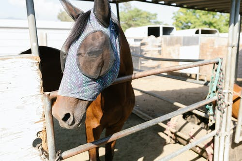 Close-Up Photo of a Horse Wearing a Fly Mask with Ear Covers