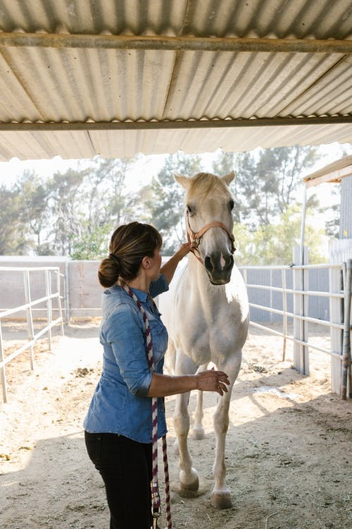 A Woman Taking Care of Her White Horse