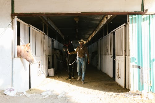 A Cowboy Walking with His Horse Inside the Barn