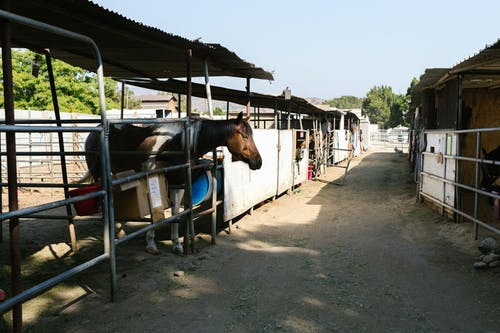 Kostnadsfri bild av bondgård, däggdjur, gård