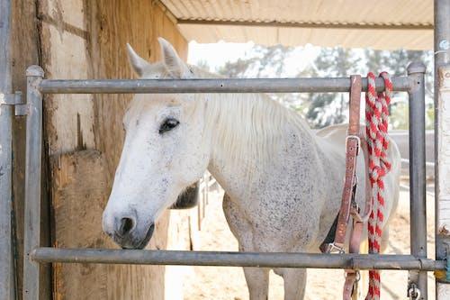 Kostnadsfri bild av däggdjur, djur, häst