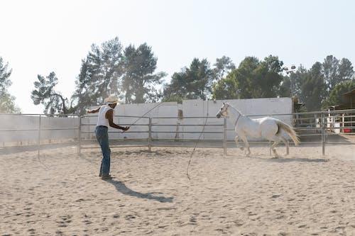 Kostnadsfri bild av cowboy, däggdjur, gård