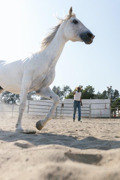 Kostnadsfri bild av däggdjur, häst, hästdjur