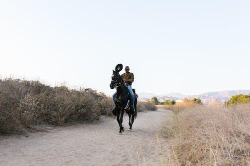 Kostnadsfri bild av cowboy, däggdjur, häst