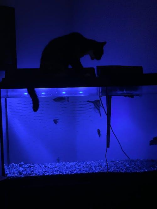 Free stock photo of aquarium fish, at night, cat