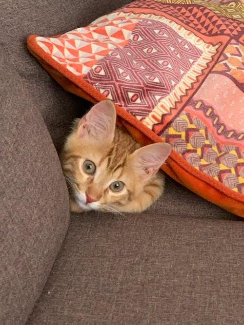 Imagine de stoc gratuită din adorabil, animal de casă, animal de companie