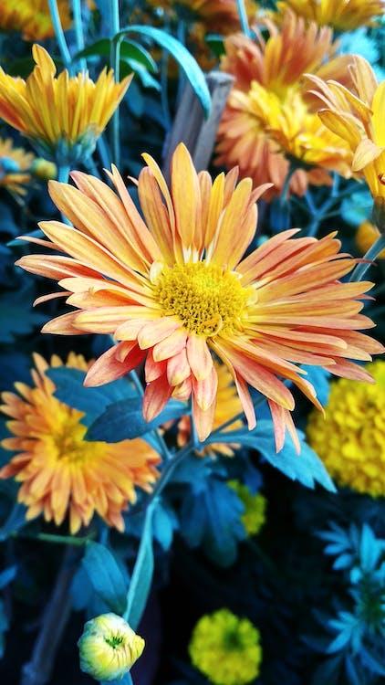 flores bonitas, fondo de pantalla de flores