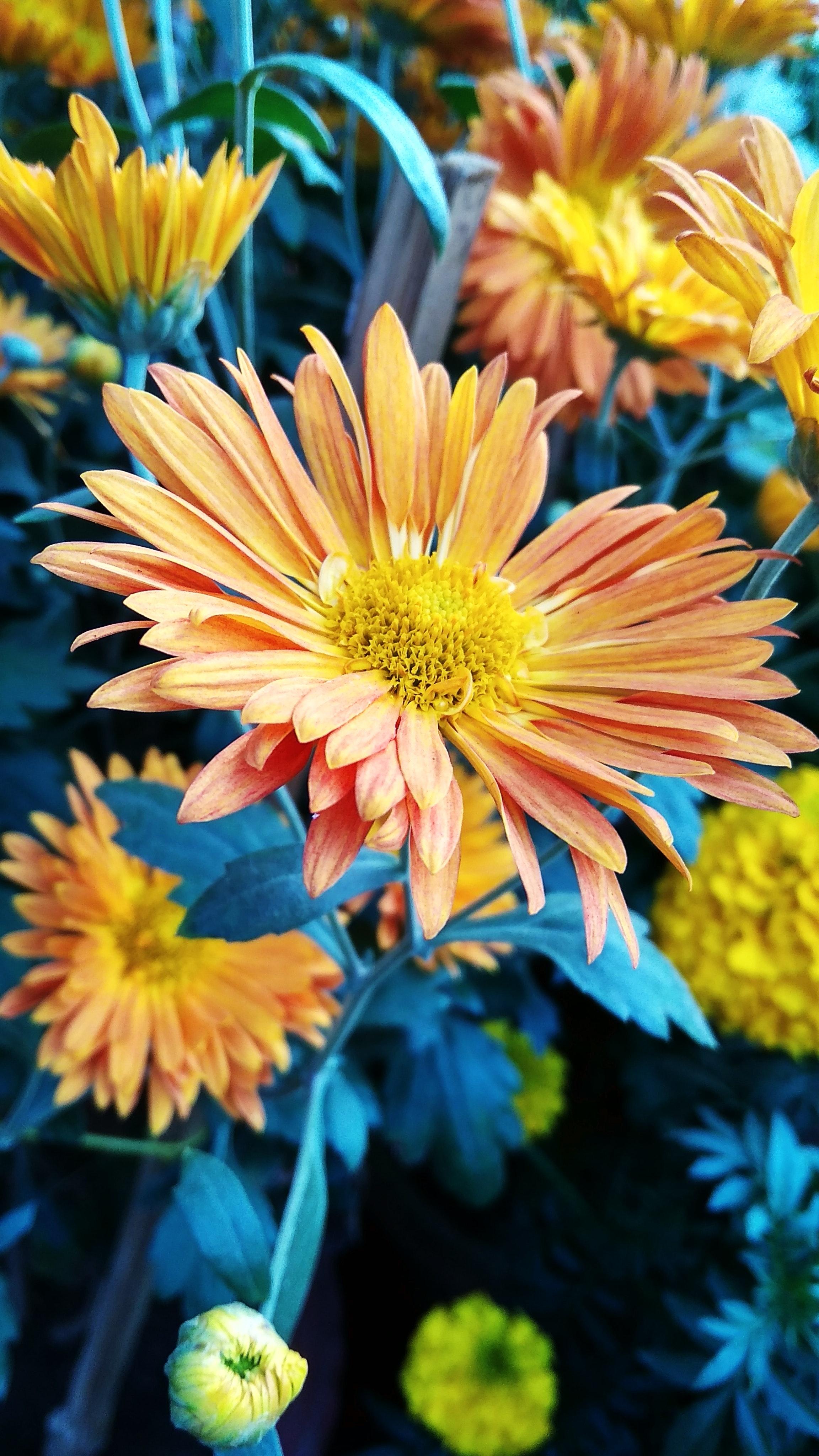 Free Stock Photo Of Beautiful Flowers Flower Wallpaper