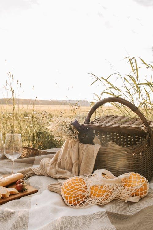 Foto d'estoc gratuïta de blat, blat de moro, camp