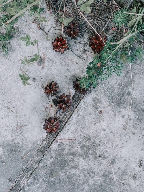 シーズン, テクスチャ, フローラの無料の写真素材
