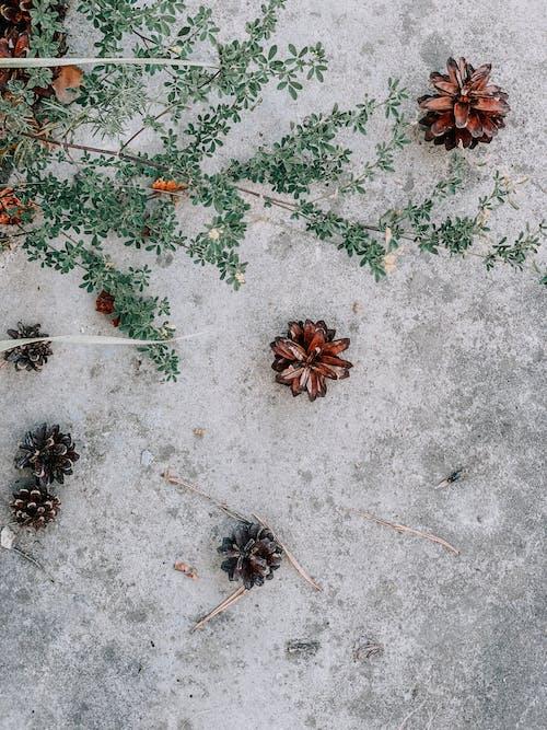 クリスマス, シーズン, テクスチャの無料の写真素材