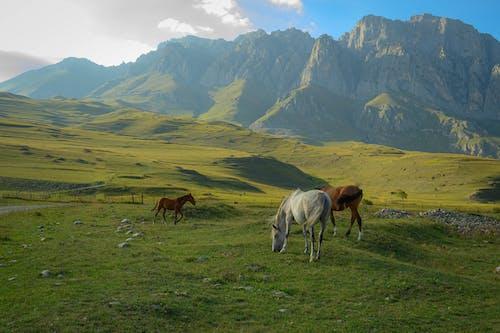 Horses on a Grassy Field near a Mountain