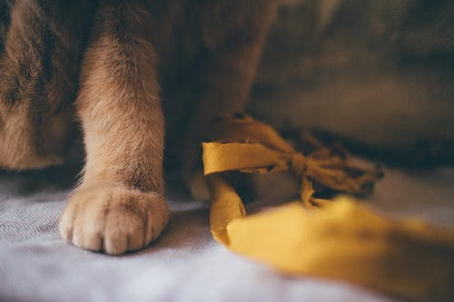 Brown Cat on White Textile
