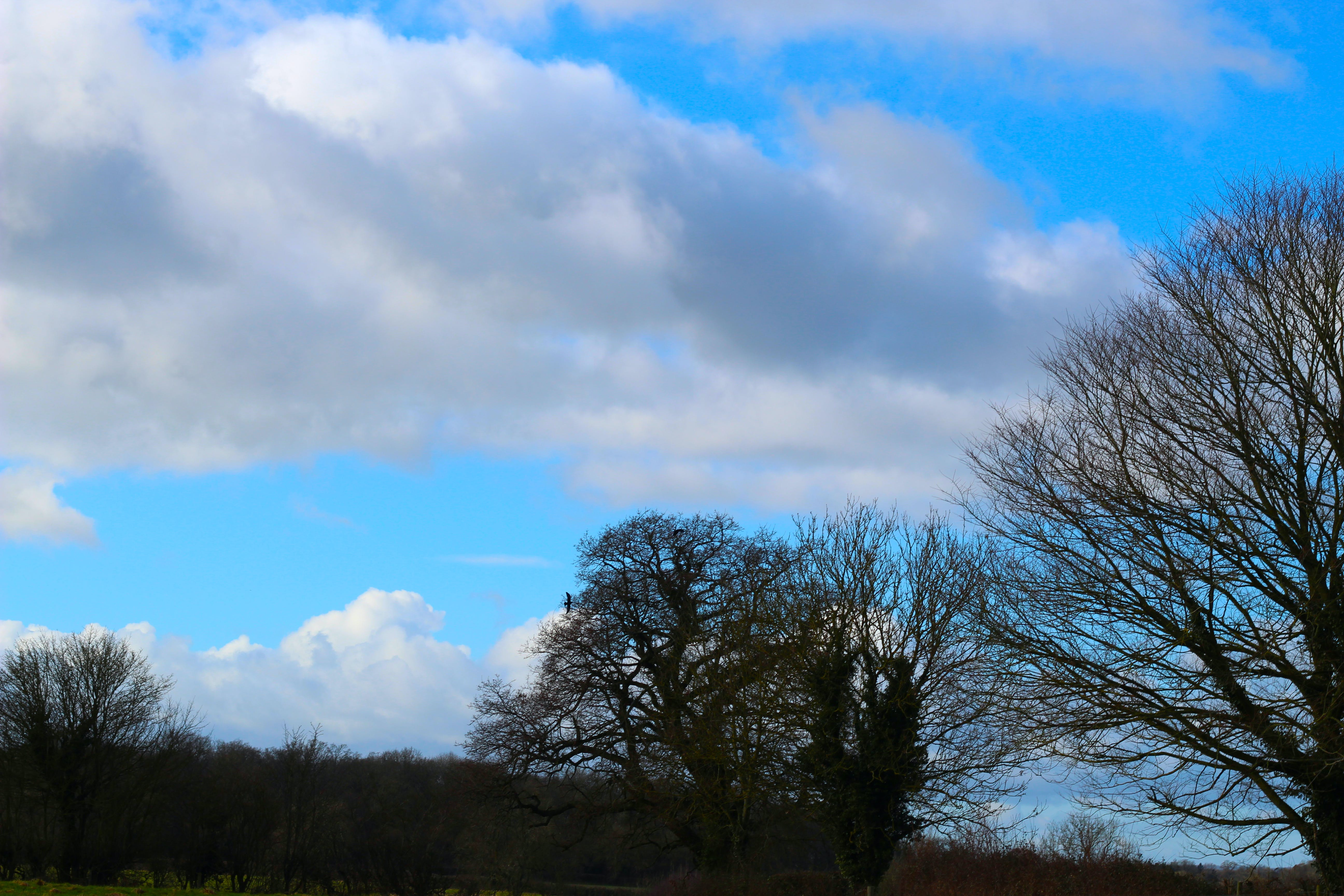 Free stock photo of blue sky, clouds, trees