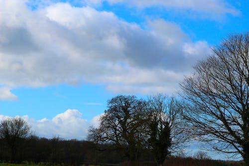 Gratis stockfoto met blauwe lucht, bomen, wolken