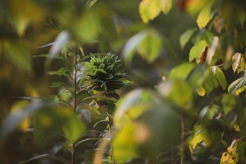 Kostenloses Stock Foto zu blätter, botanik, botanisch