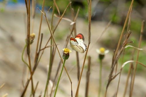 Darmowe zdjęcie z galerii z bezkręgowiec, delikatny, flora