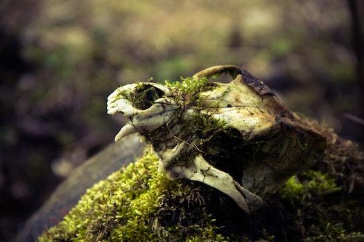 Free stock photo of nature, teeth, skull, close up