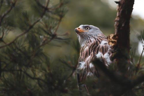 Free stock photo of animal, bird, bird of prey