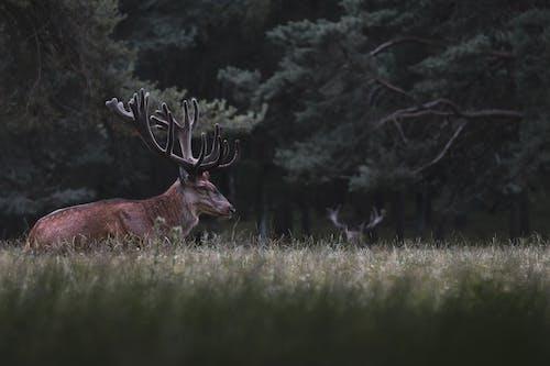 Brown Deer on Green Grass Field