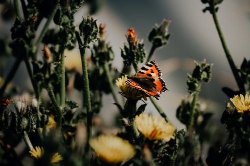Close-Up Shot of a Butterfly on a Flower