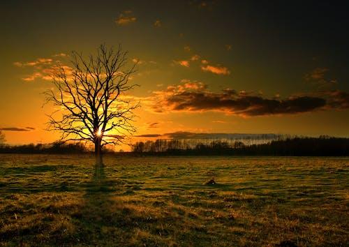 Gratis stockfoto met bladloze boom, dageraad, decor