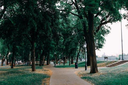 Free stock photo of city, parks, tree