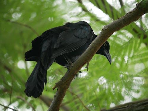 Black Bird on Brown Tree Branch