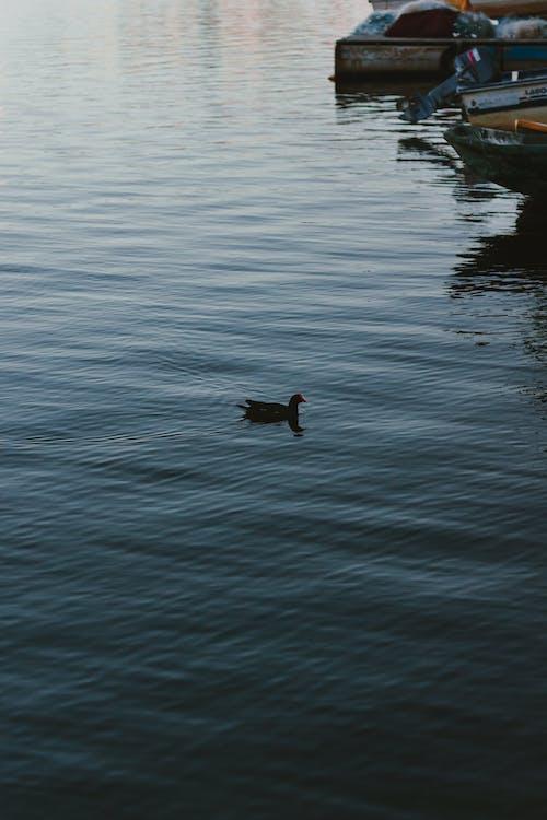 Foto stok gratis air, anjing, banjir