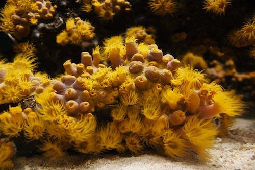 Kostenloses Stock Foto zu anemone, aquarium, draußen