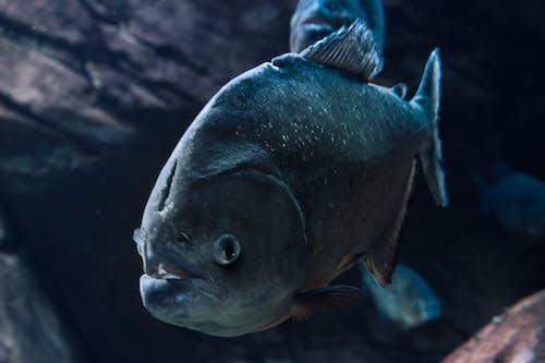 Kostenloses Stock Foto zu aquarienfische