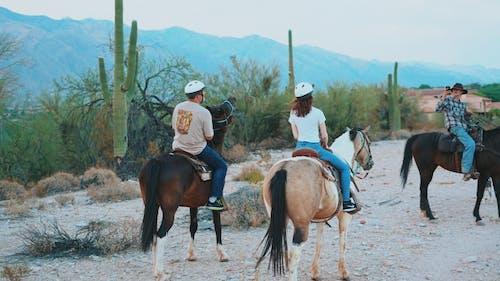 乗馬, 馬の無料の写真素材