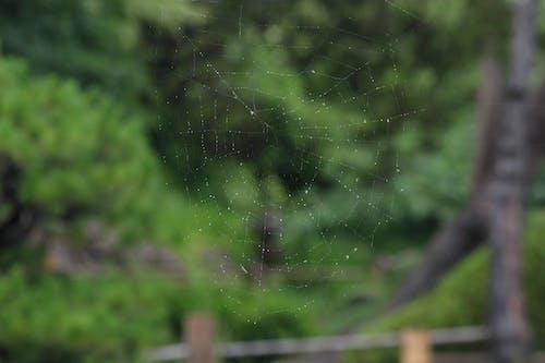 Immagine gratuita di esplorare, foresta, ragno, tela di ragno