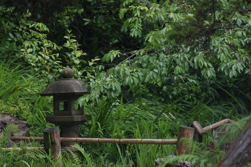 Immagine gratuita di foresta, segreto, tempio