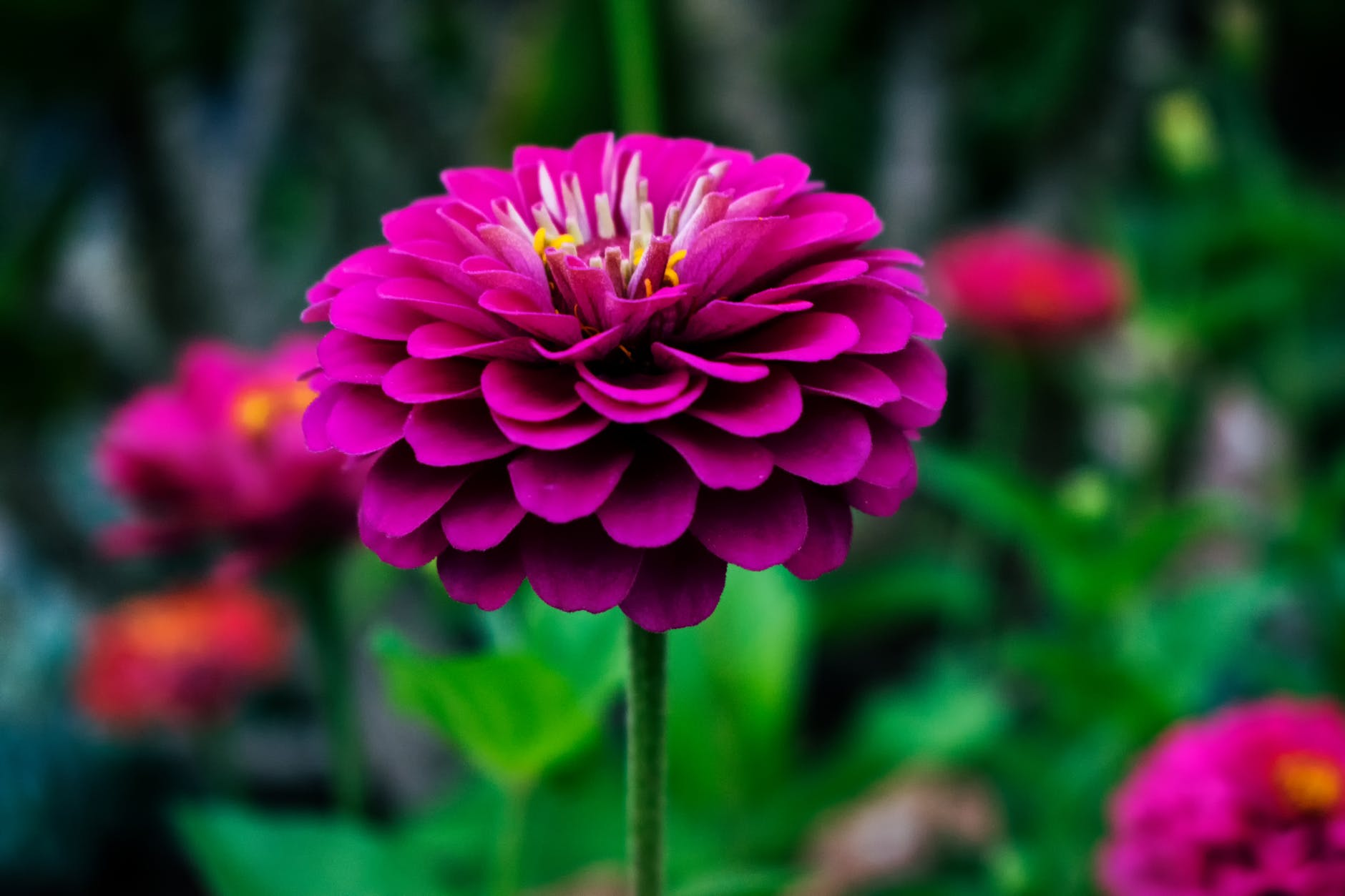 Top 10 Stunning Perennial Flowers Around The Globe You Can Grow
