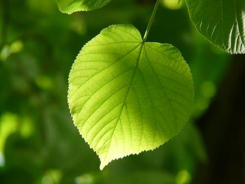 Зеленолистное растение