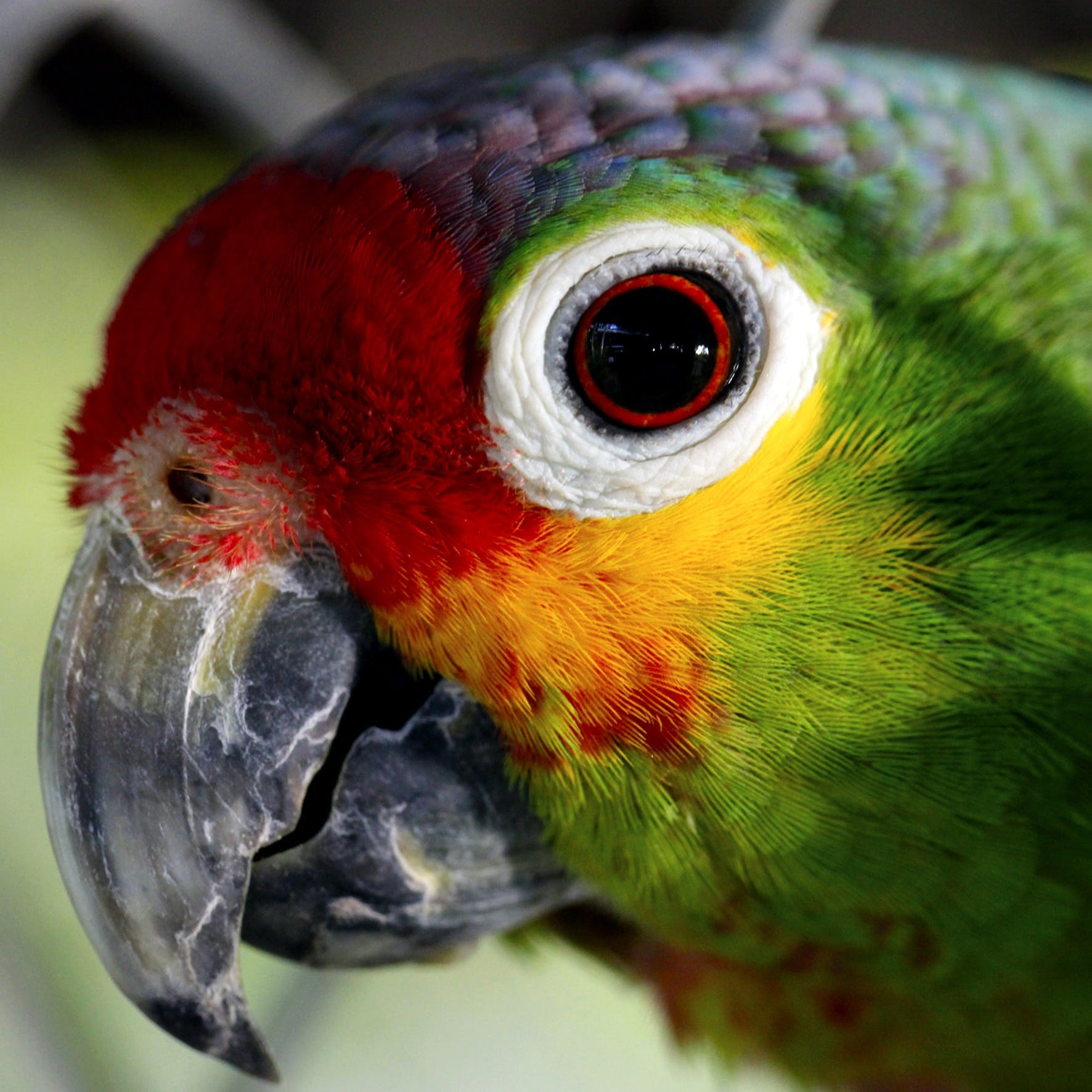 Close Up Photo of Green Red and Yellow Bird