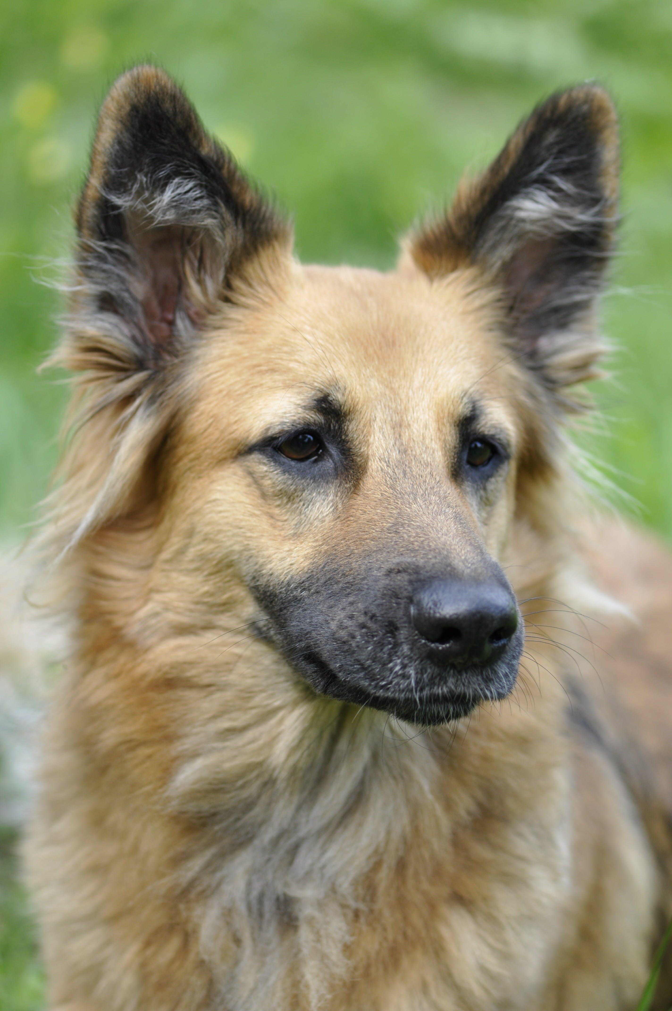 Brown Medium Size Dog