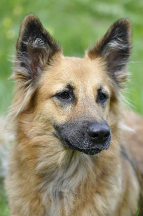 Gratis arkivbilde med dyr, dyrefotografering, hund, kjæledyr
