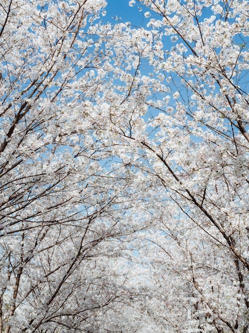 Brown Leafless Tree Under Blue Sky