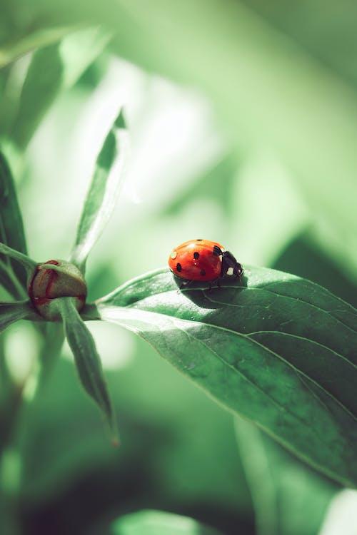 Δωρεάν στοκ φωτογραφιών με beetle, dof, macro