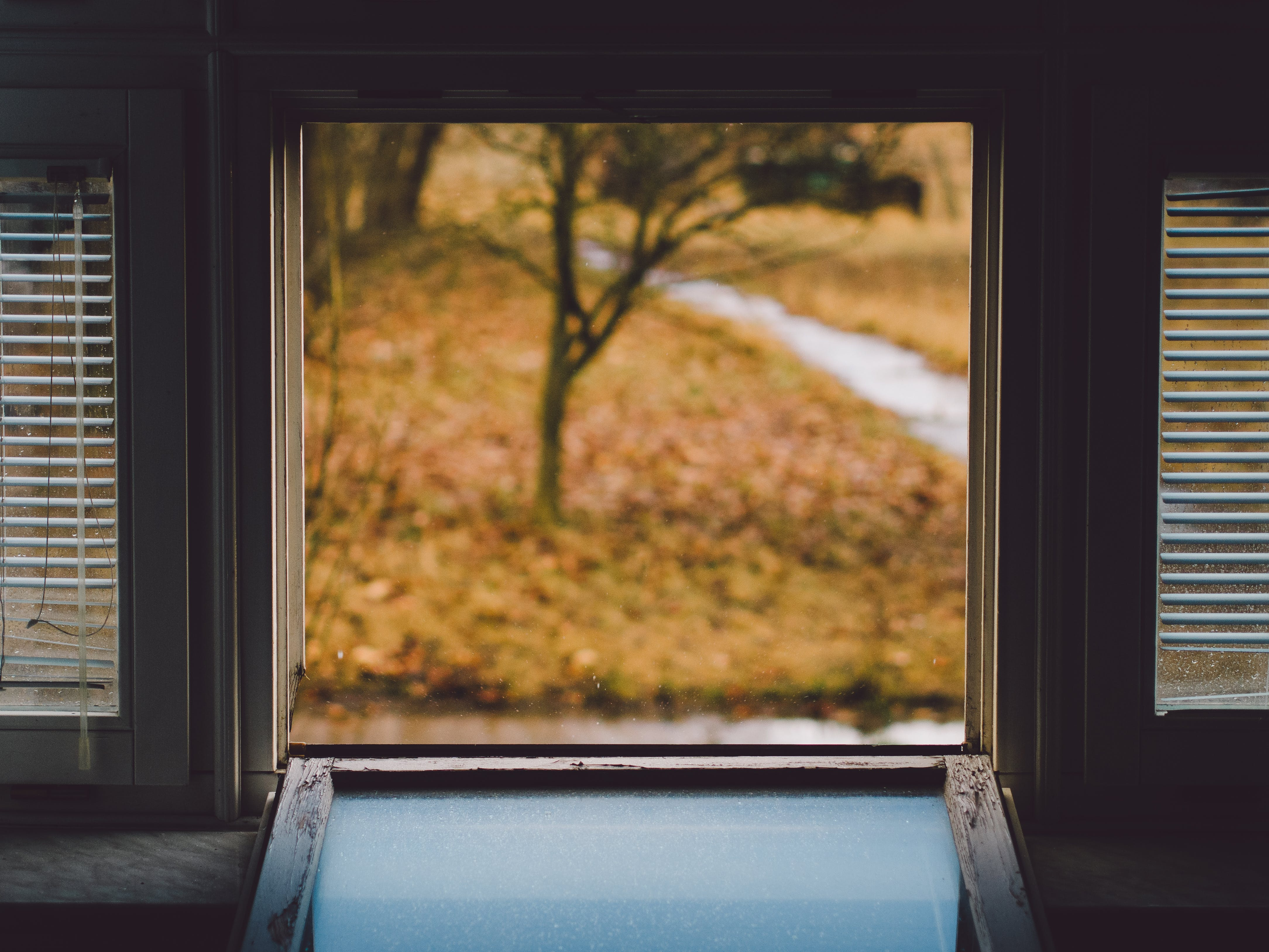 Free stock photo of wood, nature, office, glass