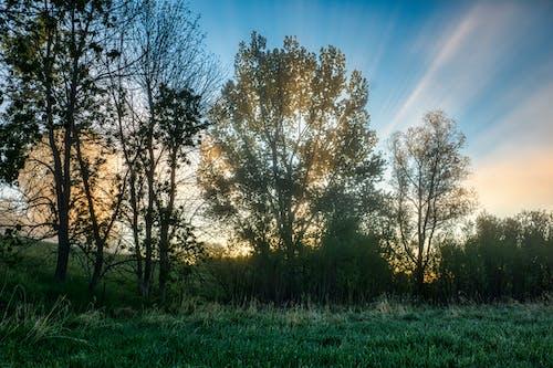Бесплатное стоковое фото с деревья, за городом, на открытом воздухе